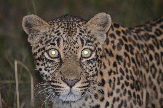 Chitwa Chitwa Private Game Reserve: Leopard