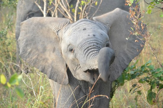 Chitwa Chitwa Private Game Reserve: Baby elephant
