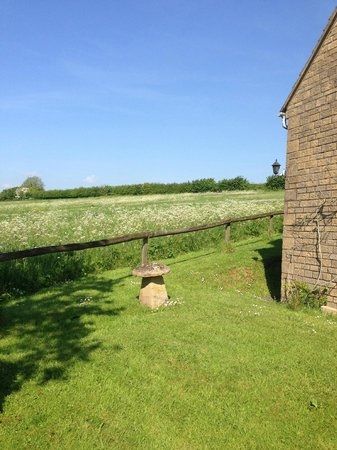 Corsham Field Farmhouse: Deer viewing