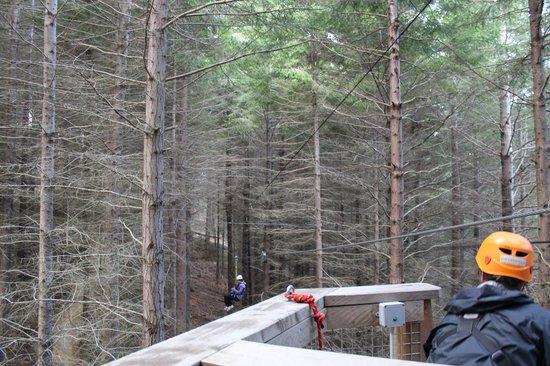 Ziptrek Ecotours: Up in the trees