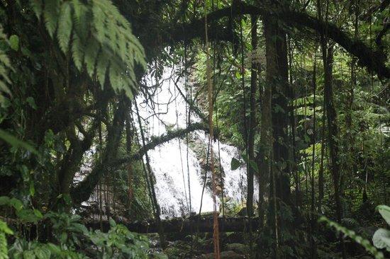Bwindi Impenetrable National Park: Upper Muyanga Falls