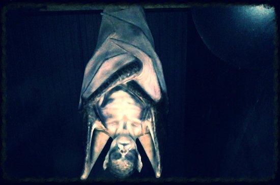 Bram Stoker's CASTLE DRACULA: Castle Dracula