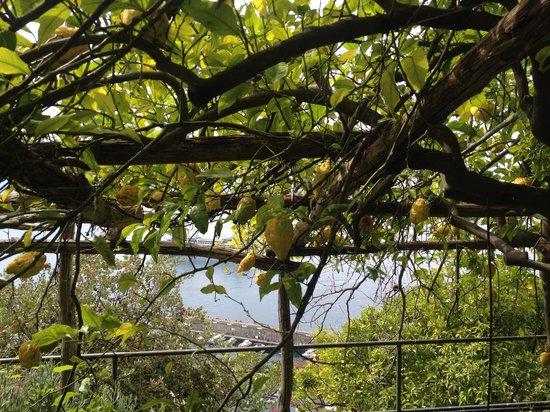 NH Collection Grand Hotel Convento di Amalfi : una passeggiata tra i limoni