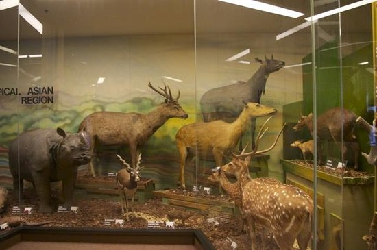 Museo del Sur de Australia: World Mammals Gallery (ground floor), free