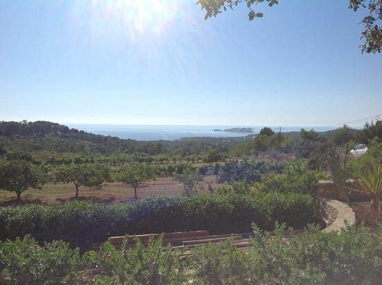Finca Can Xuxu : The View