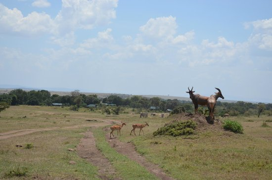 Offbeat Mara Camp: Le camp au loin avec les toits verts...