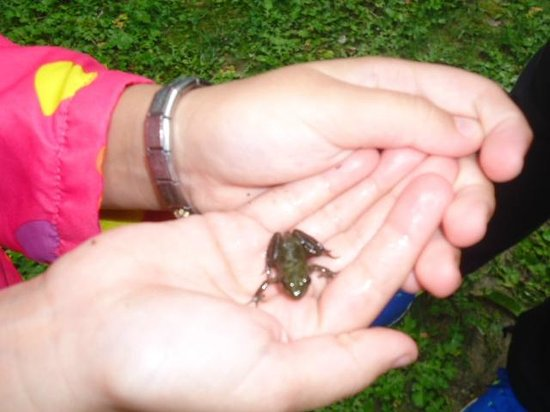 Forest Edge Nature-lovers' Retreat: froggy!!