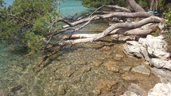 Hotel Odisej Mljet : Near the lake