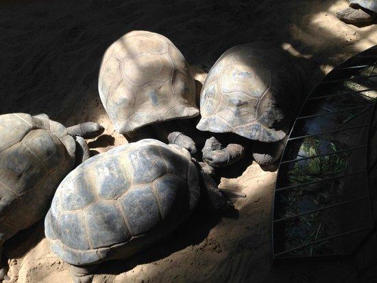 Tartarughe enormi picture of parco faunistico le for I gatti mangiano le tartarughe