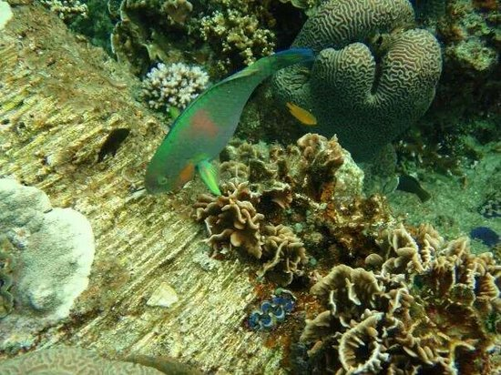 Cosy Bungalows: parrot fish is chewing the coral