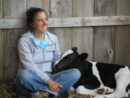 Rutland, MA: one week old bull calf