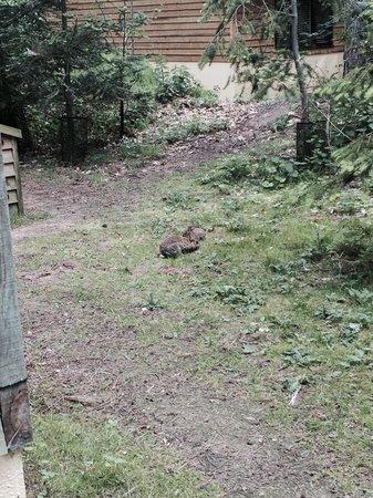 Center Parcs Elveden Forest: Bunnies