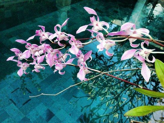 Amarterra Villas Bali Nusa Dua - MGallery Collection: :)