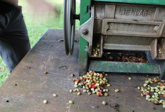 1000 Cups of Coffee: Coffee safari- mechanical bean separator at village small coffee farm