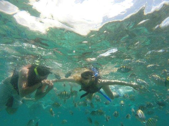 Catamaya Sailing Cruises: snorkeling