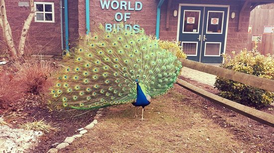 Cape May County Park & Zoo : the peacocks love to show off