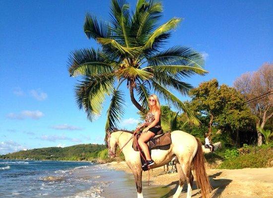 Equus Rides: 2