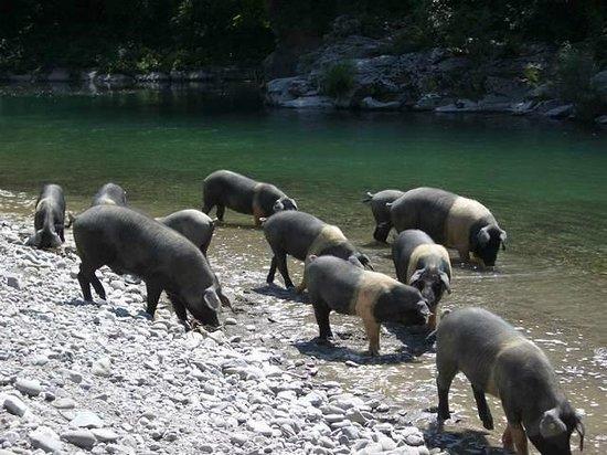 agriturismo pian di fiume i nostri animali