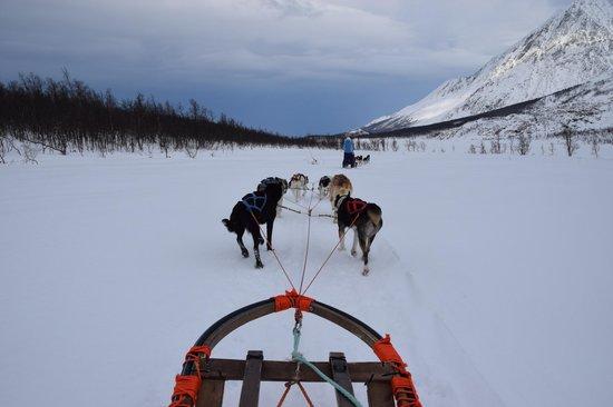 Dog Sledding Lyngen Alps Day Tour: Dogsledding on a frozen lake