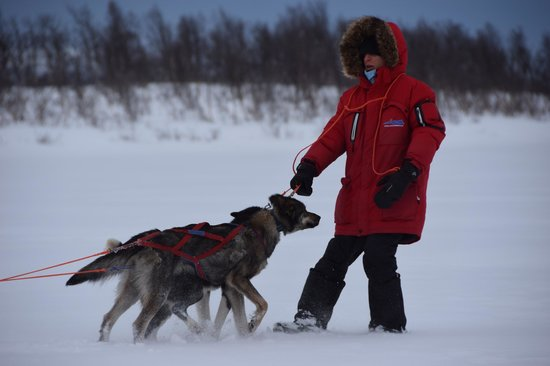 Dog Sledding Lyngen Alps Day Tour: The expedition leader