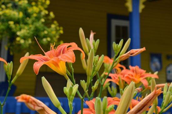 Au Saut Du Lit : Balcon fleuri