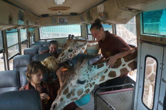 Safari Park Open Zoo : The safari experience