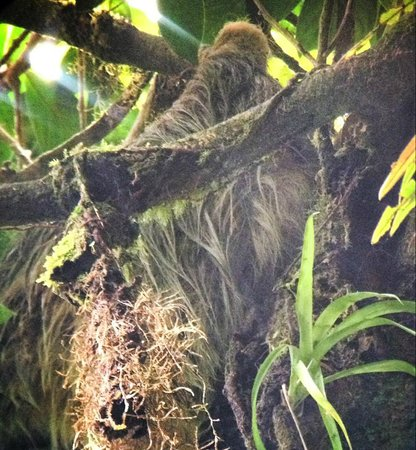 La Casona Lodge: Sloth