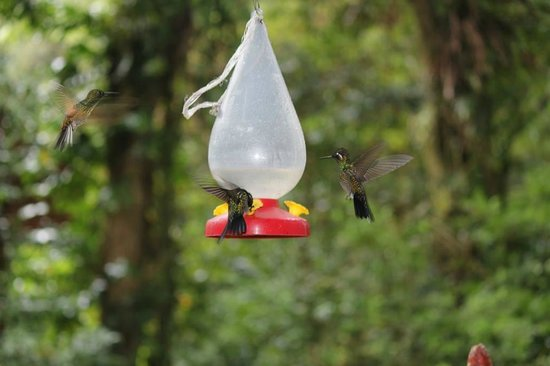 La Casona Lodge : Hummingbirds galore