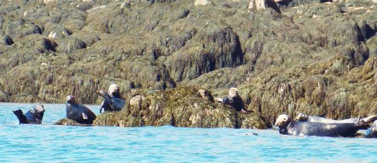 Advocate Boat Tours: Large Seal colony on Isle Haute