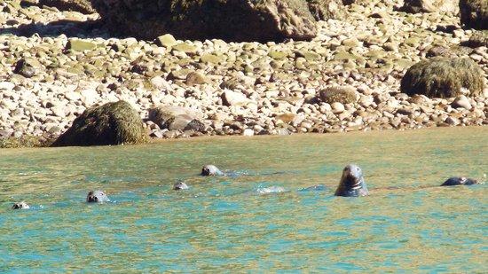 Advocate Boat Tours: Curious Seals