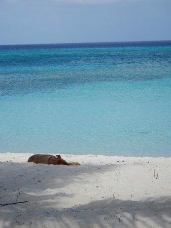 Bohio Dive Resort : Beach View