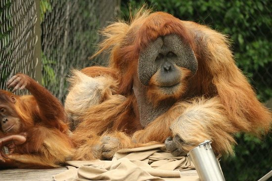 Melbourne Zoo: .