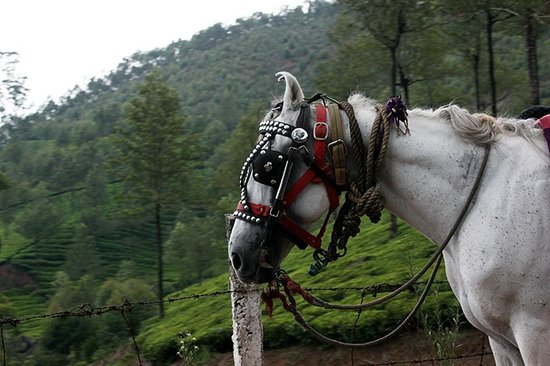 Ayur County Resorts: Horse riding