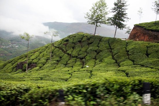 Ayur County Resorts: Tea Estates