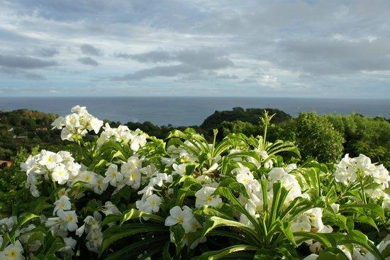 Pousada Colina dos Ventos: sea view from the garden (open to all guests)