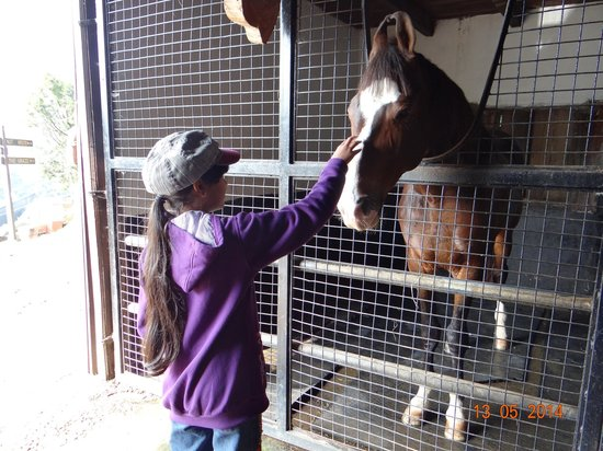 Destiny Farmstay : the daughter petting Braveheart,a retired racehorse!