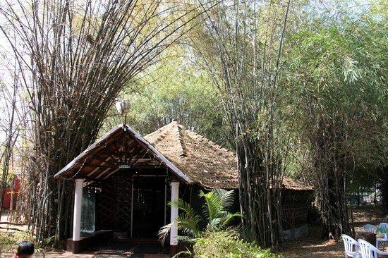 Jungle Inn: dinning shed