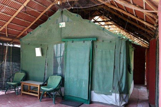 Jungle Inn: tent houses