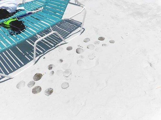 Island House Beach Resort : Sand Dollars