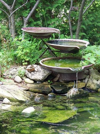 Plum Bottom Pottery & Gallery : Fountain attracts many species of bird