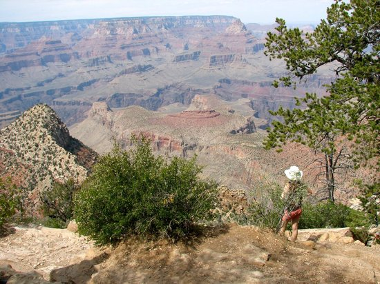 Coconino National Forest: Grand Canyon South Rim