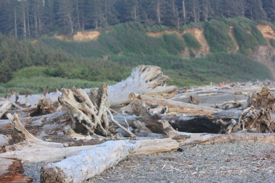 Quileute Oceanside Resort : La Push Beach