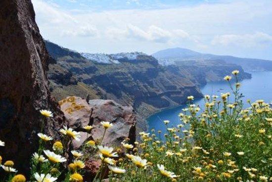 Skaros Rock: Beautiful wild flowers