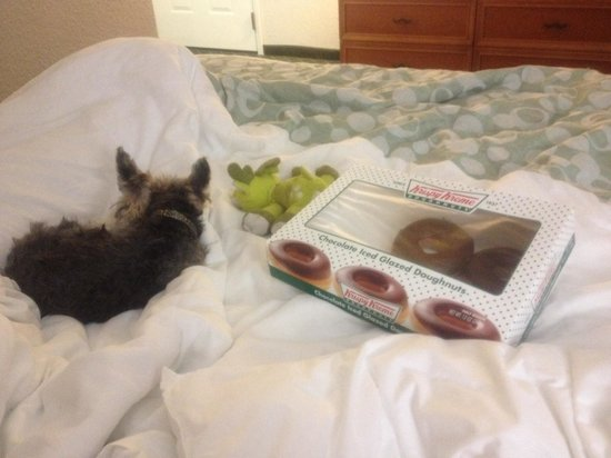 La Quinta Inn & Suites Orlando Airport North: Snuggled up and comfy on our last night! (Got the donuts from a walmart down the street).