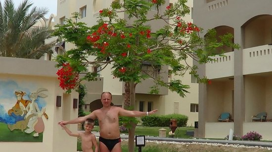 Nubia Aqua Beach Resort : красивые цветущие деревья возле детской площадки