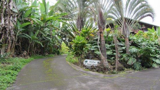 Aloha Guest House : Driveway