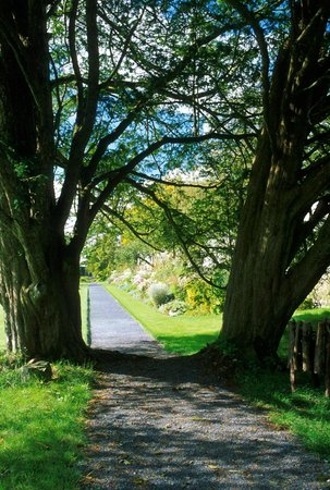 Oldcastle, Ireland: Trees and Border