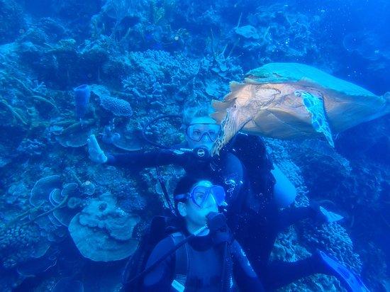 Plongee Grand Cozumel Diving: Wow , quel beau moment !