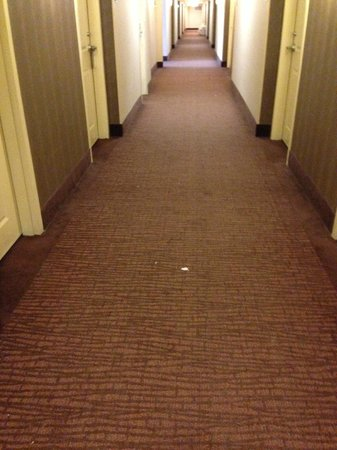 DoubleTree by Hilton Hotel Sterling - Dulles Airport: Dirty hallway, never vacuumed from Thur to Sun