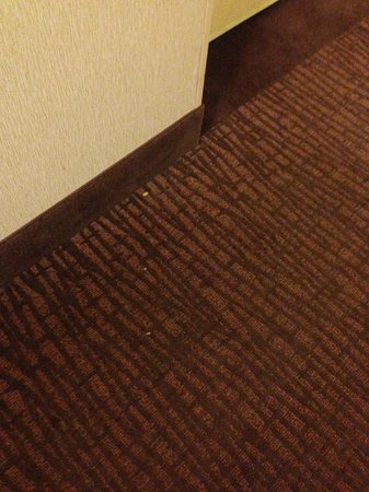 DoubleTree by Hilton Hotel Sterling - Dulles Airport : Dirty hallway